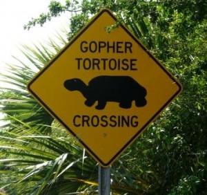 Schild Achtung Schildkröten passieren hier