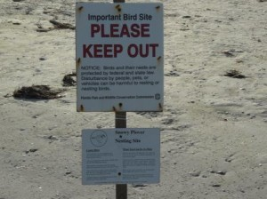 Vogelnest am Strand