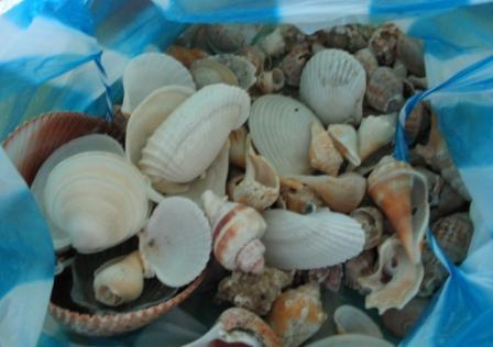 Muschelfund auf Sanibel