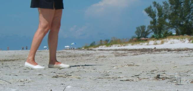 Seeregenpfeifer Kueken am Strand entdeckt