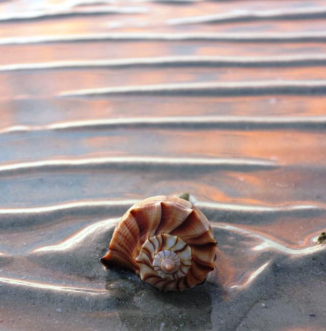 Muschel am Strand bei Sonnenaufgang