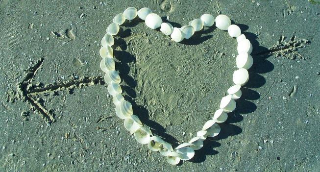 Herz aus Venusmuscheln