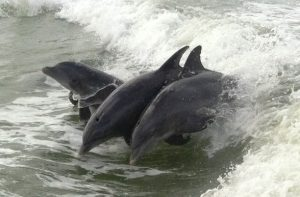 Delfine ganz nahe