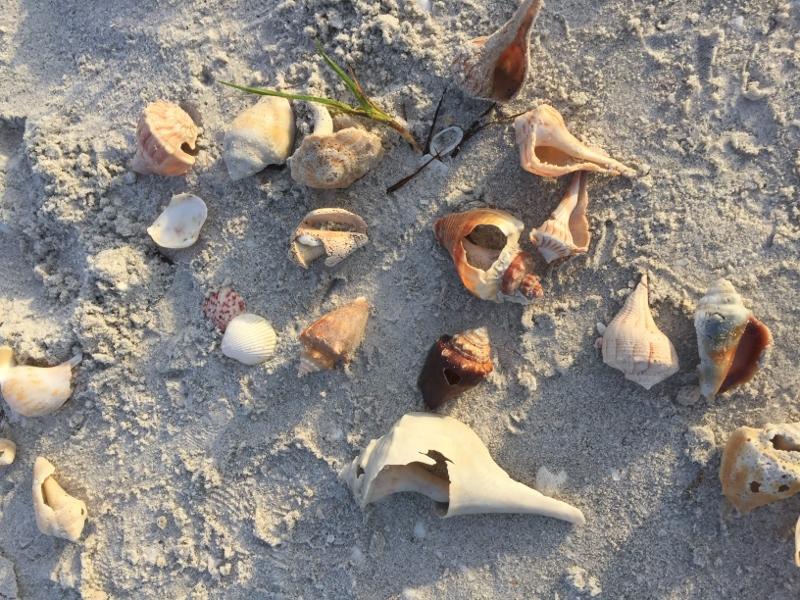 Muscheln bei Sonnenaufgang sammeln